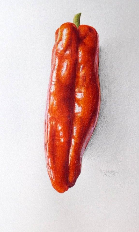 Spitzpaprika Zeichnung von Mischa
