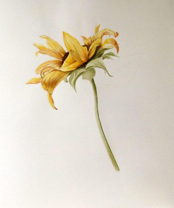 Sonnenblumen gibt es in vielen Formen, eine gemahlte von Mischa Skorez