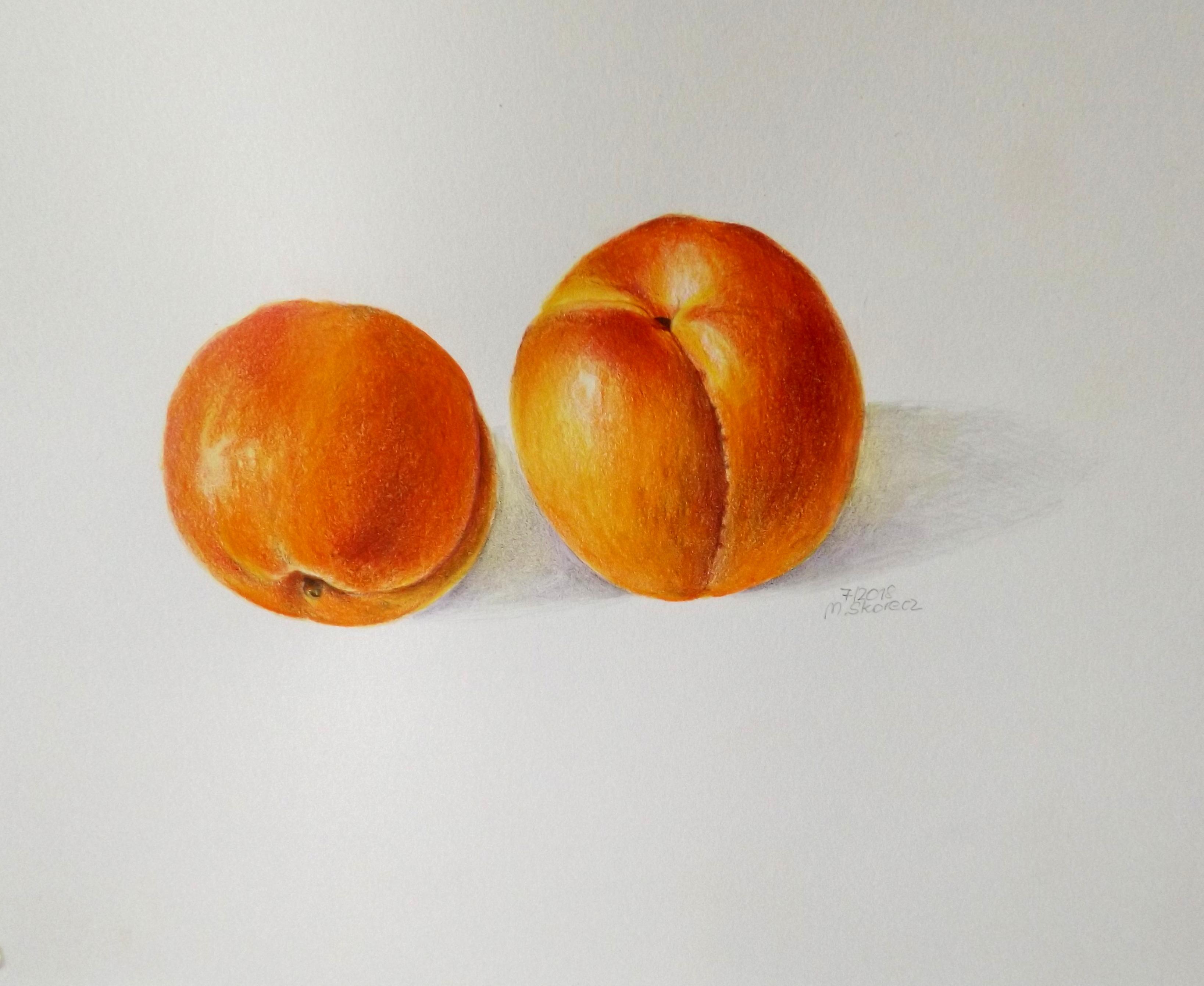 Marillen – köstliches Obst aus dem Marchfeld