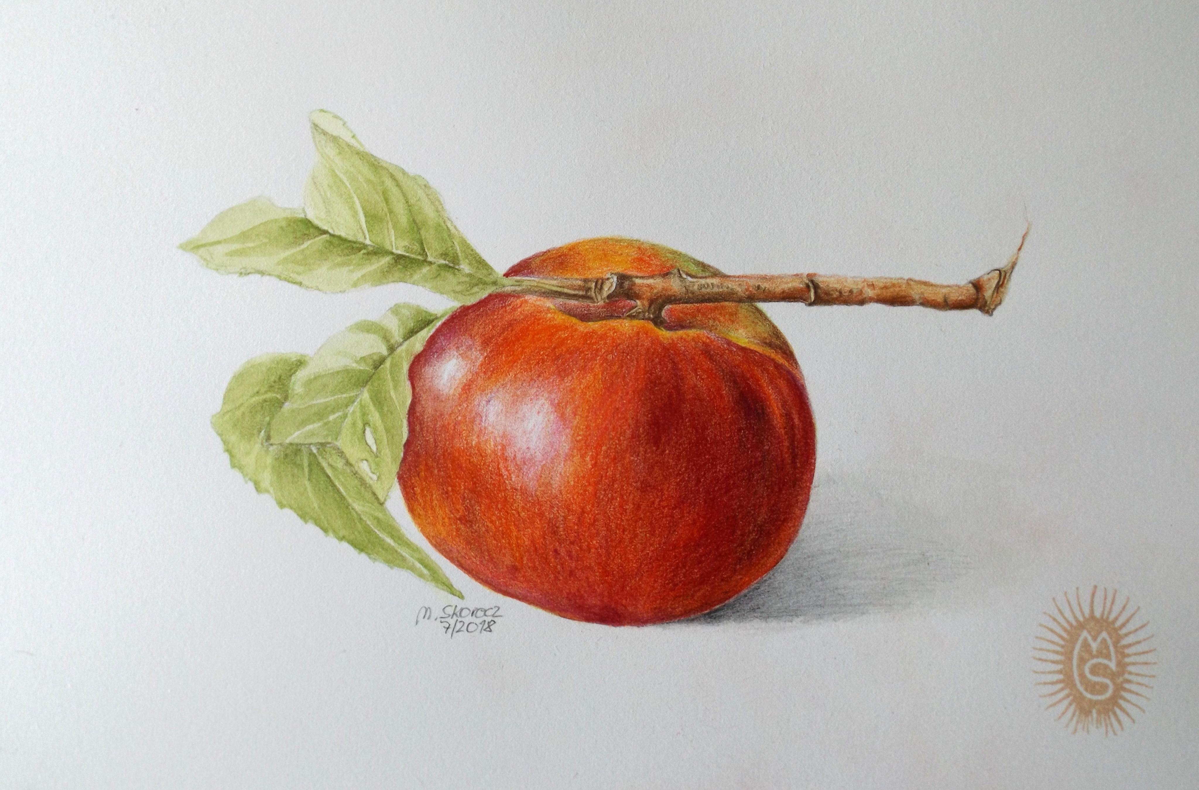Nektarine, gezeichnet von Mischa Skorecz