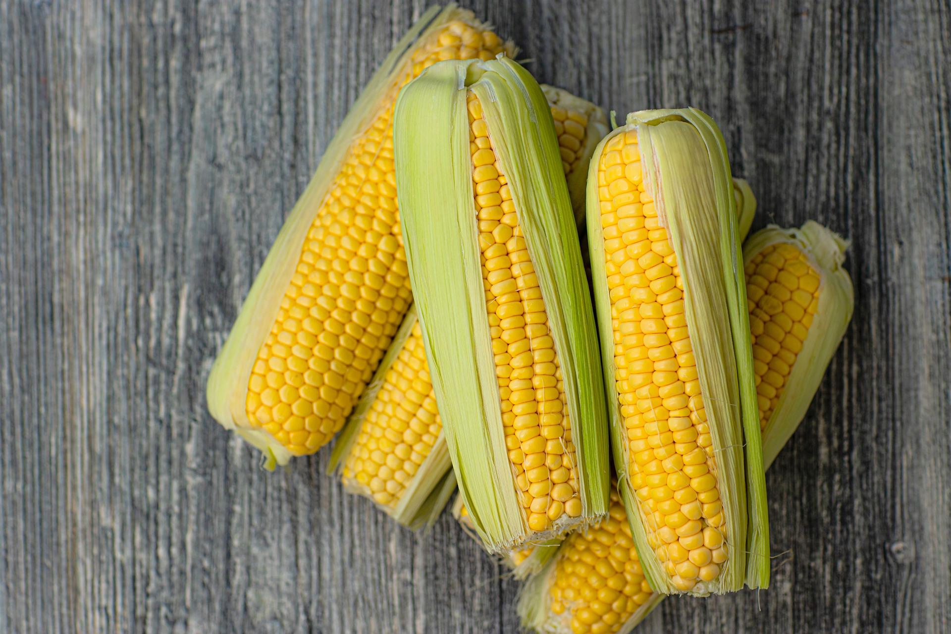 Mais in all seiner Vielfalt