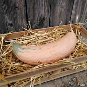Pink Banana im Stroh