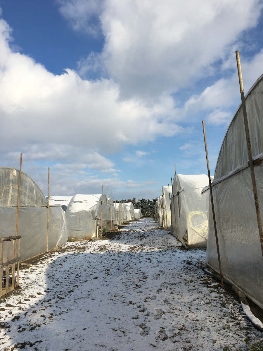 Biohof Mader Folientunnel Schnee