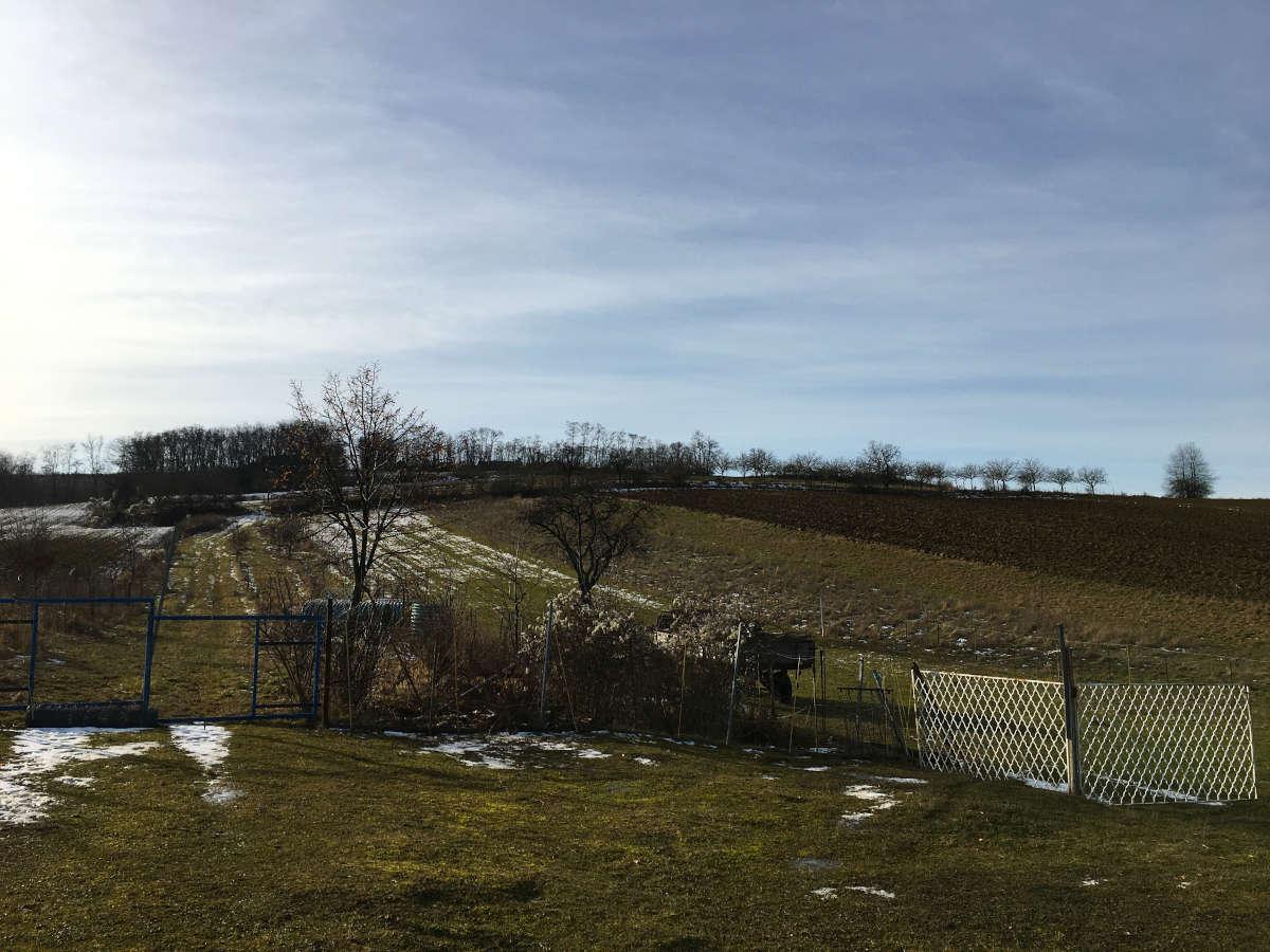 Stühof Walnussplantage