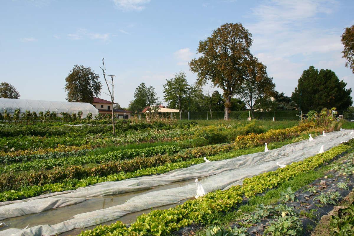 Buntgemüse Bio-Gemüse Vielfalt